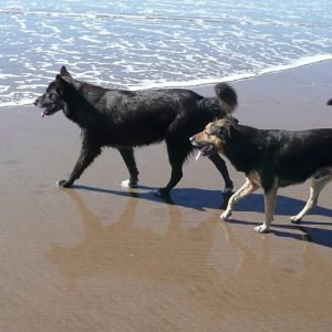 DOG'S DAY AT THE BEACH