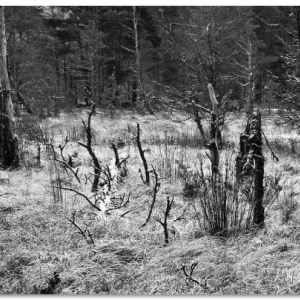 BW FOREST