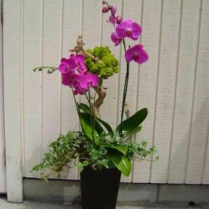 Orchids and Plants