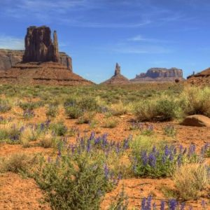 Arizona Landscape