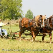 2013 US Horse Plowing Contest - Practice Day