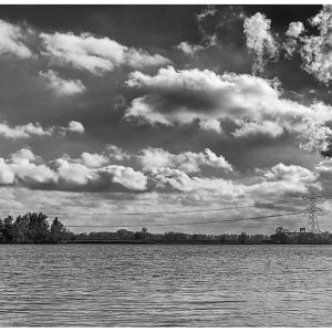 NATIONAL PARK DE BIESBOSCH IN B/W