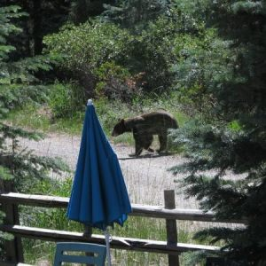 Bear in the pond on 2012-07-27